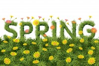 Flowers Spring Field Season Background with Word